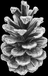 image_pinecone