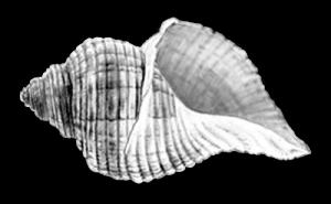 image_seashell